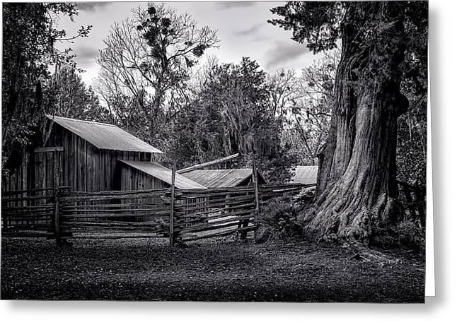 Cracker Barn And Gnarled Southern Red Cedar Greeting Card