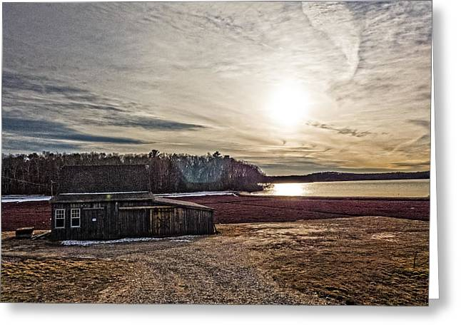 Cranberry Bog Winter Of 2012 Greeting Card by Frank Winters