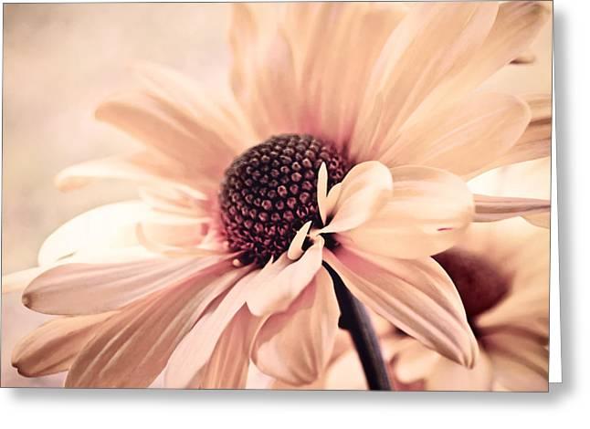 Cranberry Chiffon Greeting Card by Darlene Kwiatkowski
