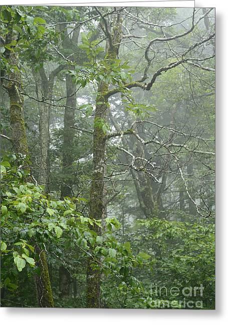 Cranberry Wilderness Mist Greeting Card
