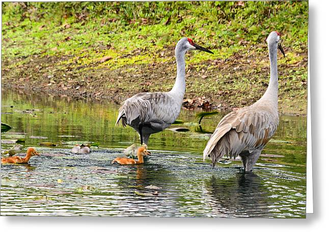 Crane Family Swim II Greeting Card