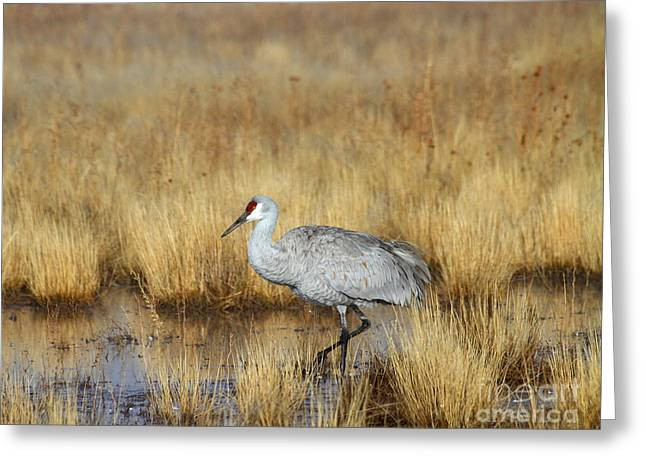 Greeting Card featuring the photograph  Solitary Crane In The Field by Ruth Jolly