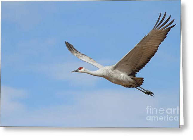 Greeting Card featuring the photograph Crane In The Skies by Ruth Jolly