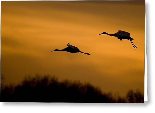 Cranes At Sunset Greeting Card