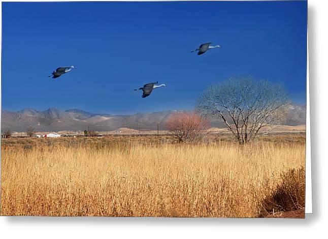 Cranes In Flight Greeting Card by Barbara Manis
