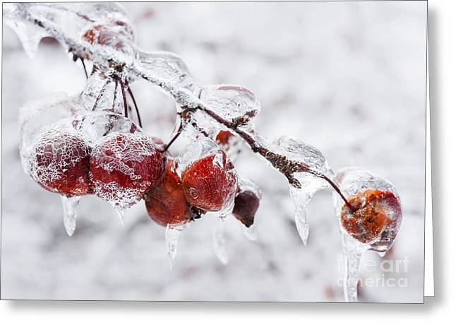 Crab Apples On Icy Branch Greeting Card