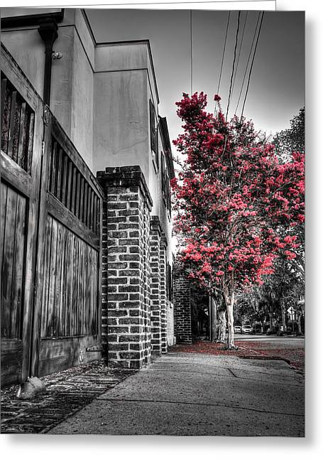 Crape Myrtles In Historic Downtown Charleston 2 Greeting Card