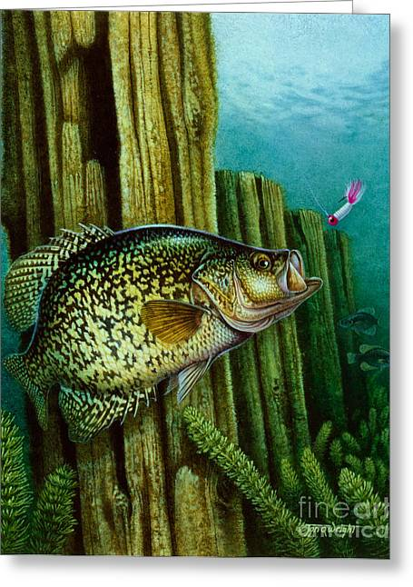 Crappie And Posts Greeting Card by Jon Q Wright