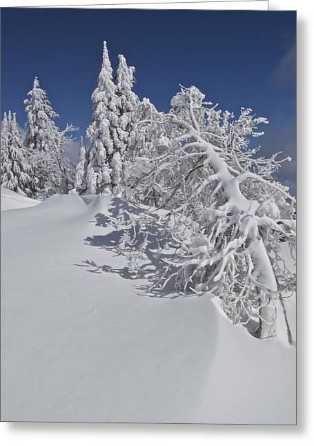 Crater Lake Trees 2 Greeting Card
