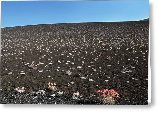 Craters Of The Moons Plants Greeting Card