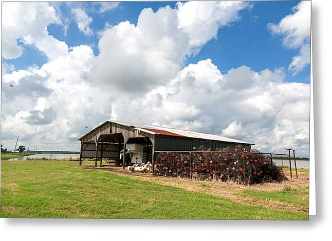 Greeting Card featuring the photograph Crawfish Farm With Nets by Gregory Daley  PPSA