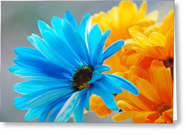 Crazy Daisies Greeting Card by Linda Segerson