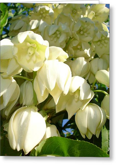 Cream Flowers Of A Cordyline Cabbage Tree  Greeting Card by Tracey Harrington-Simpson