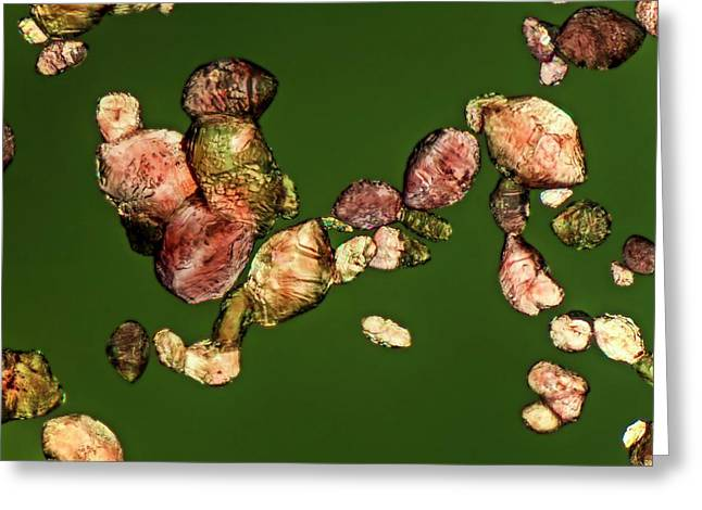 Cream Of Tartar Crystals Of Red Wine Greeting Card by Gerd Guenther