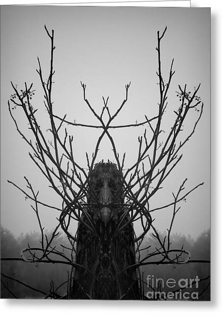 Creature Of The Wood Bw Greeting Card by David Gordon