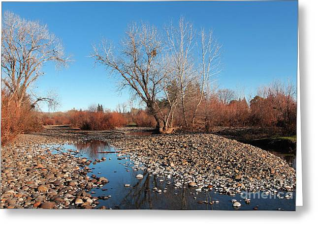 Creek Bed Greeting Card by David Taylor