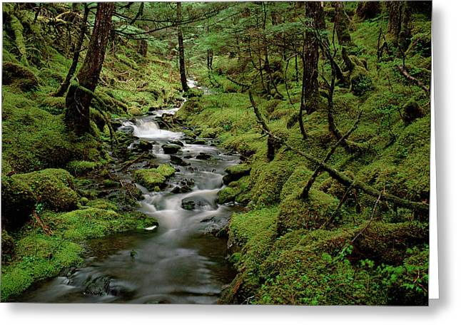 Creek In Temperate Rainforest Greeting Card by Matthias Breiter