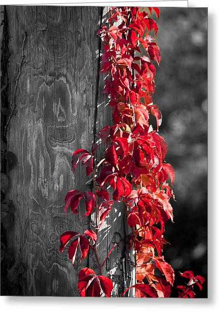 Creeper On Pole Desaturated Greeting Card by Teresa Mucha
