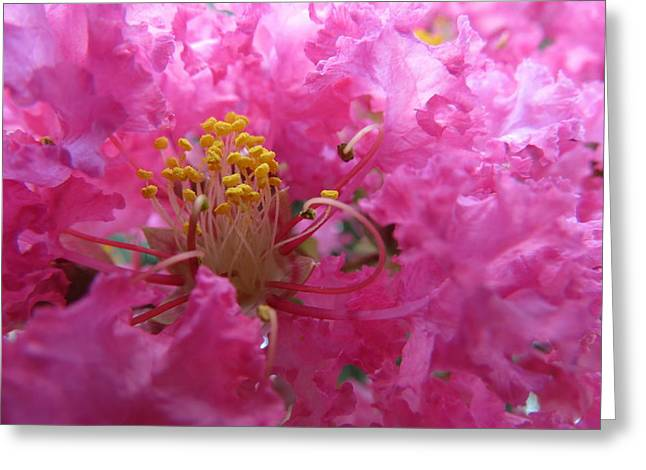 Crepe Myrtle In The Middle Greeting Card by Fortunate Findings Shirley Dickerson
