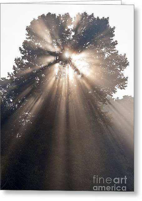 Crepuscular Rays Coming Through Tree In Fog At Sunrise Greeting Card