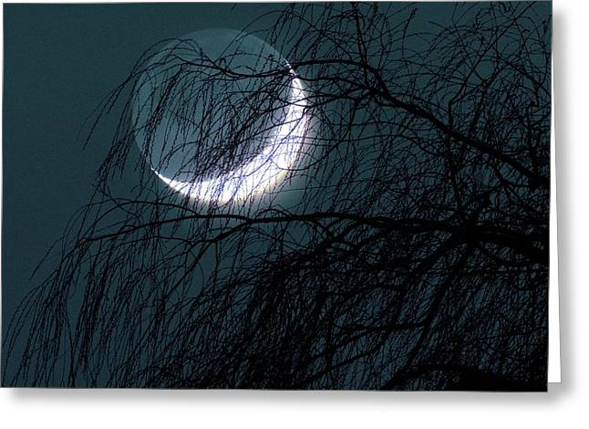 Crescent Moon Behind A Tree Greeting Card