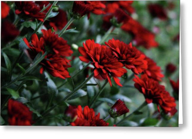 Crimson And Clover Greeting Card