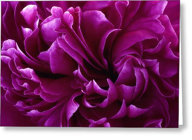 Crimson Chiffon Greeting Card