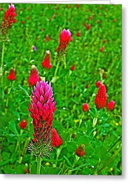 Crimson Clover At Mile 199 Of Natchez Trace Parkway-mississippi Greeting Card by Ruth Hager