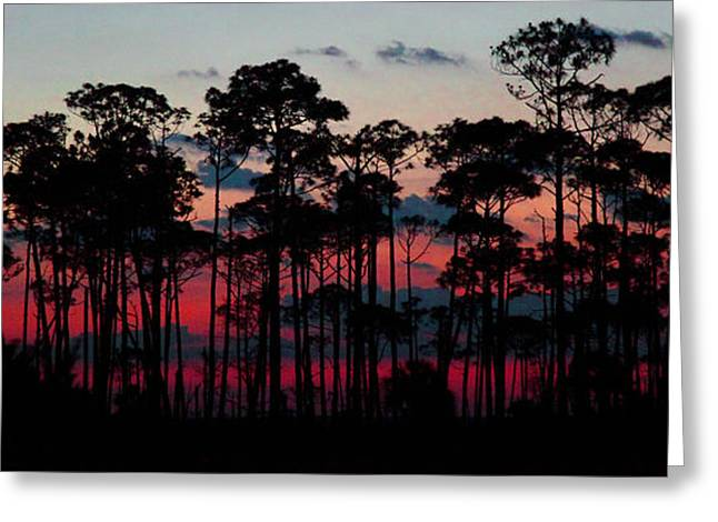 Crimson In The Pines Greeting Card