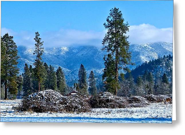 Greeting Card featuring the photograph Crisp In Blue by Julia Hassett