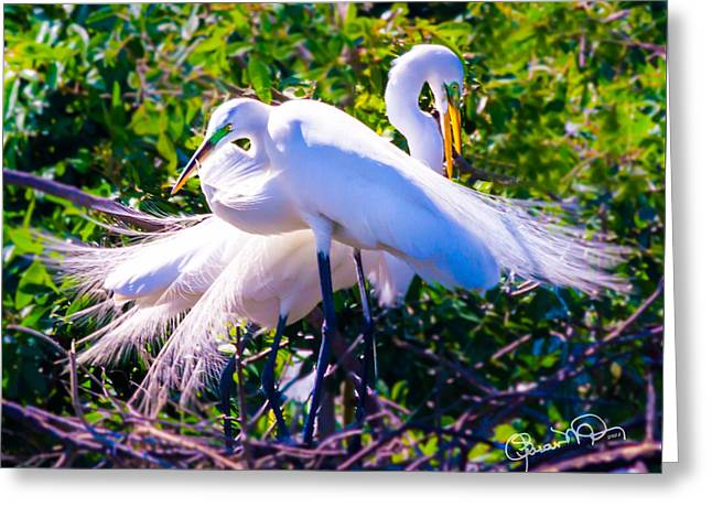 Criss-cross Egrets Greeting Card