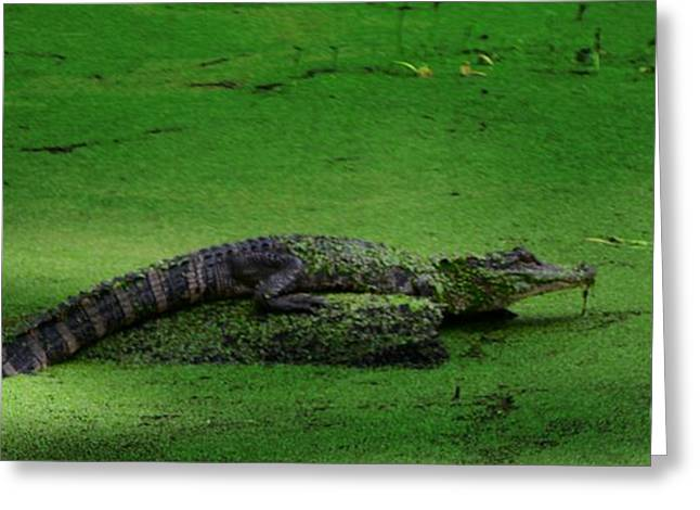 Crocodile Greeting Card by Kathleen Struckle