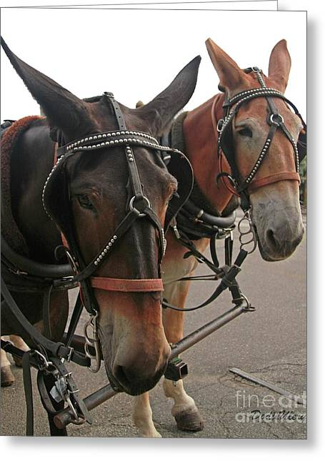 Mules In Harness -crocket And Tubbs Greeting Card