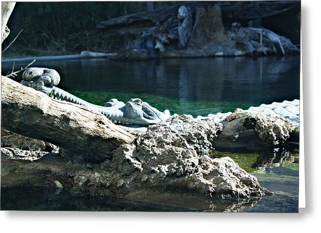 Crocodile Tears Greeting Card