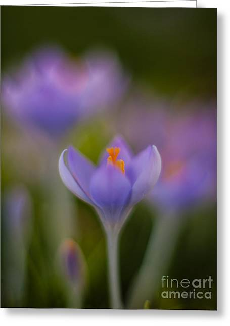 Crocus Ethereal Greeting Card