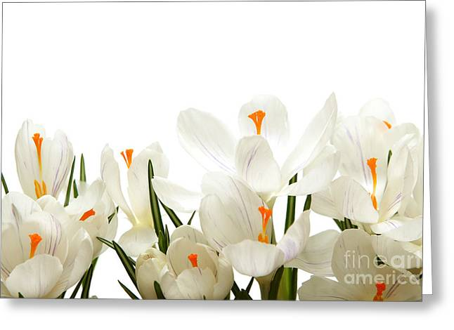 Crocus Flower Greeting Card by Boon Mee