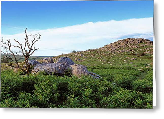 Crooked Tree At Down Tor, Dartmoor Greeting Card by Panoramic Images