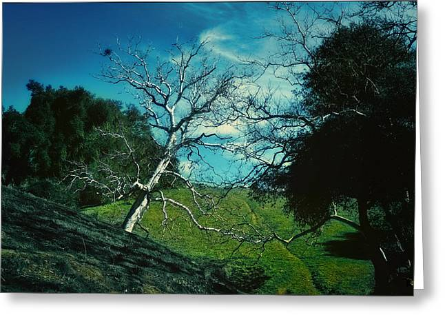 Crooked Way Greeting Card by Douglas MooreZart