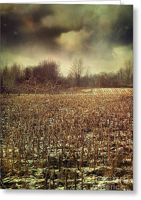 Crop Field In Early Winter After First Snow Greeting Card by Sandra Cunningham
