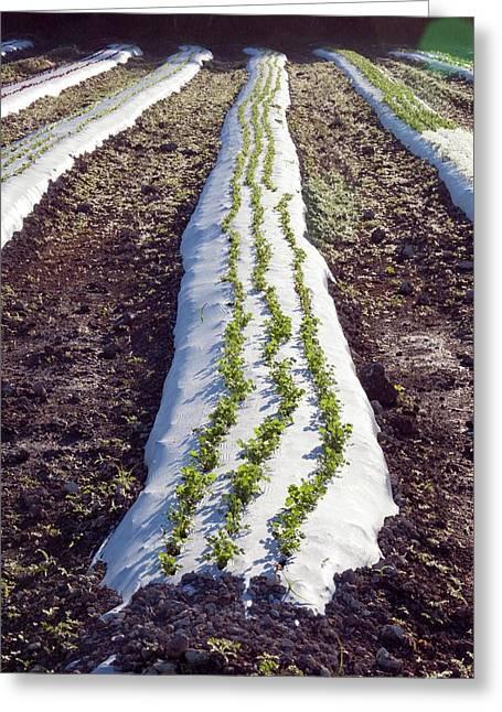 Crop On An Organic Farm Greeting Card