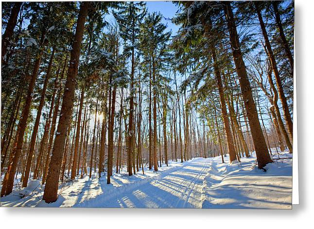 Cross-country Ski Trail In A Spruce Greeting Card by Jerry and Marcy Monkman