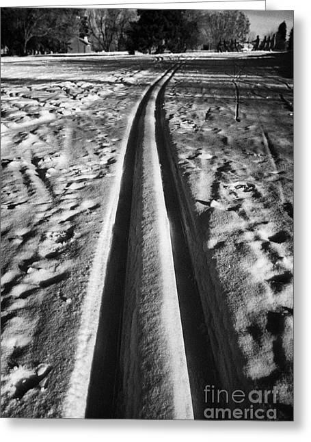 cross country skiing tracks in kinsmen park Saskatoon Saskatchewan Canada Greeting Card by Joe Fox
