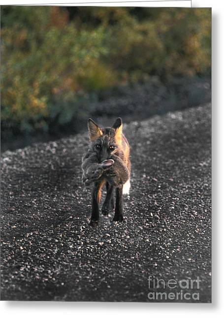 Cross Fox Greeting Card by Ron Sanford