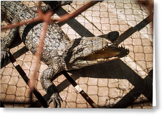 Crossbred Crocodile Greeting Card by Paul Williams