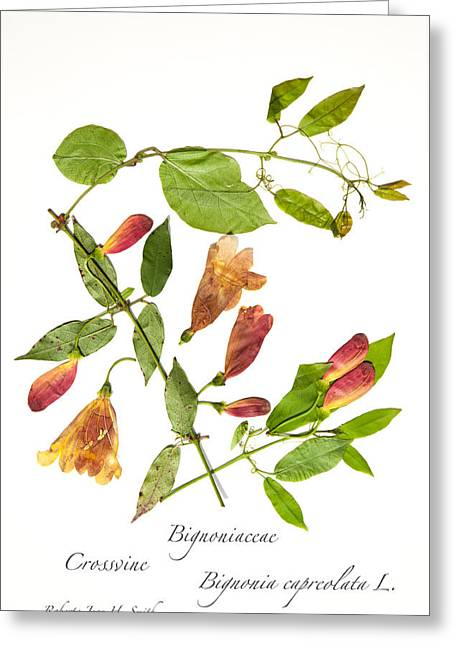 Crossvine Greeting Card