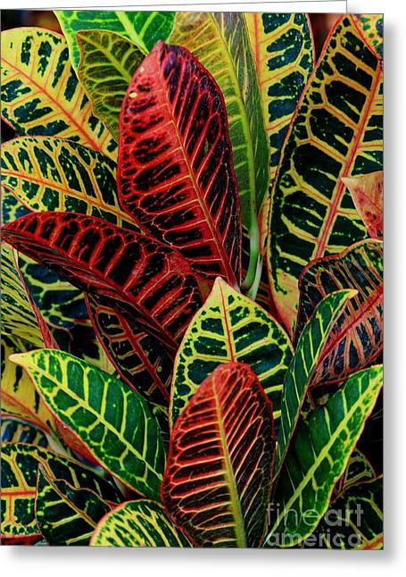 Greeting Card featuring the photograph Croton Leafscape by Larry Nieland