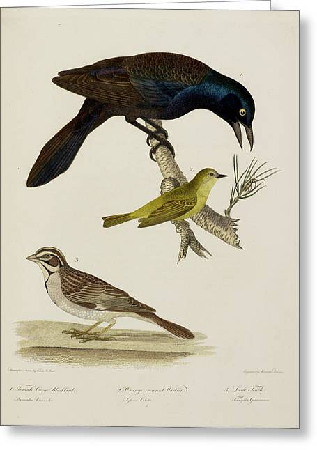 Crow Blackbird. Warbler. Finch Greeting Card by British Library