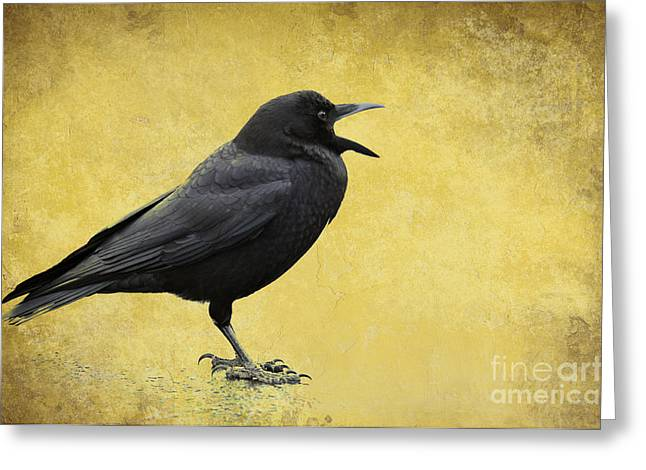 Crow - D009393-a Greeting Card