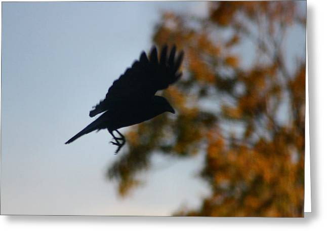 Crow In Flight 1 Greeting Card by Gothicrow Images