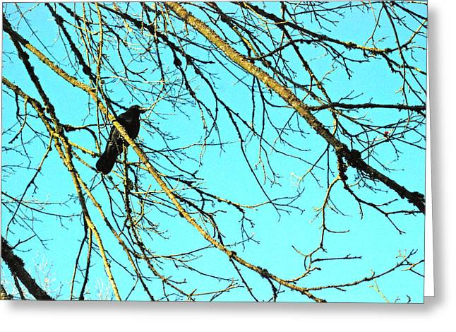 Greeting Card featuring the photograph Crow by Kjirsten Collier
